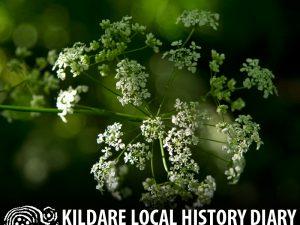 2017 Giraldus Lecture - Folk Medicine @ Kildare Parish Centre | Kildare | County Kildare | Ireland